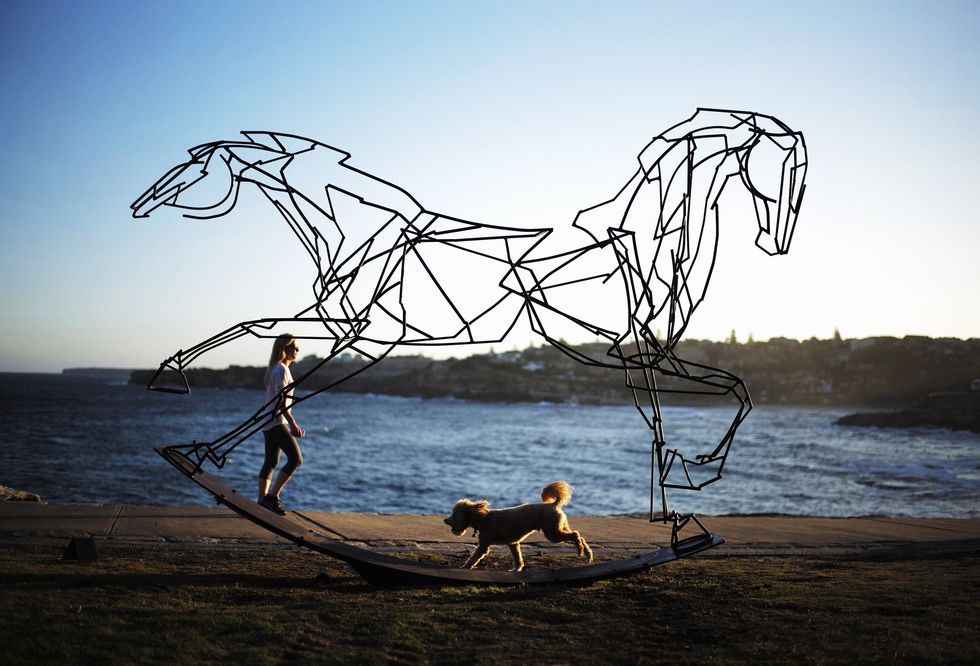 A dog runs alongside a sculpture by Harrie Fasher titled 'Which way forward?' as part of the